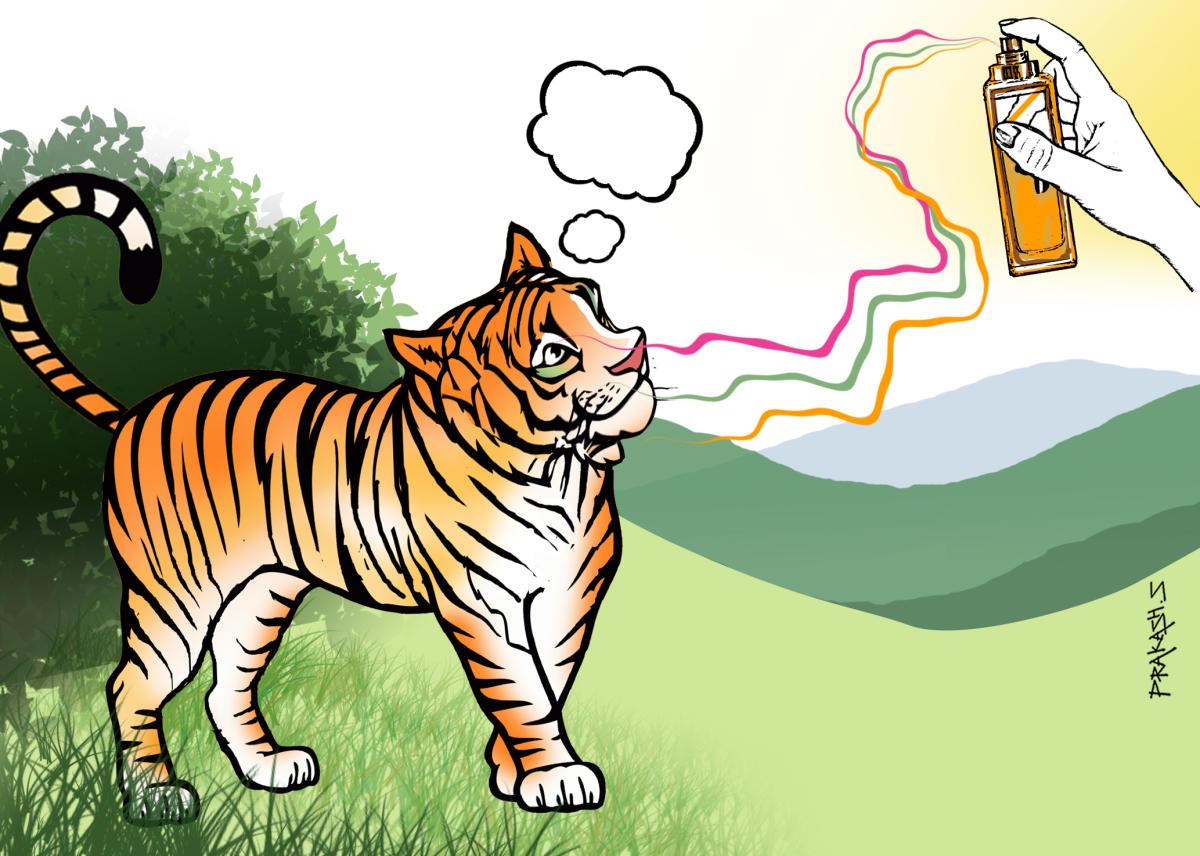 Tigress illustration
