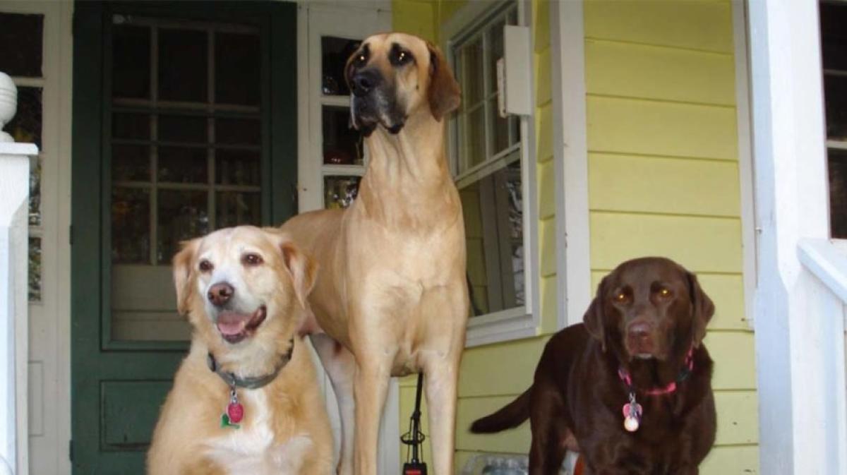 Dogs. File photo for representation.