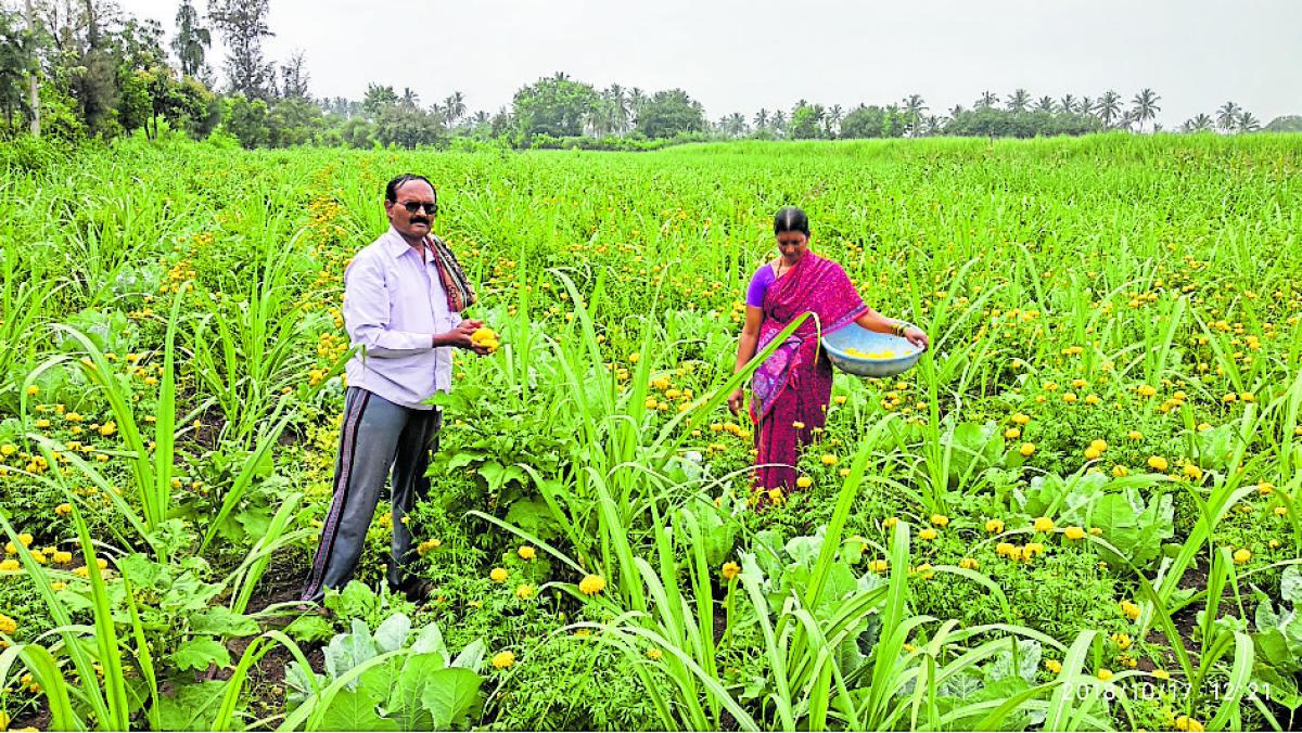 Meenakshi and Dhareppa Kittur in their farm.