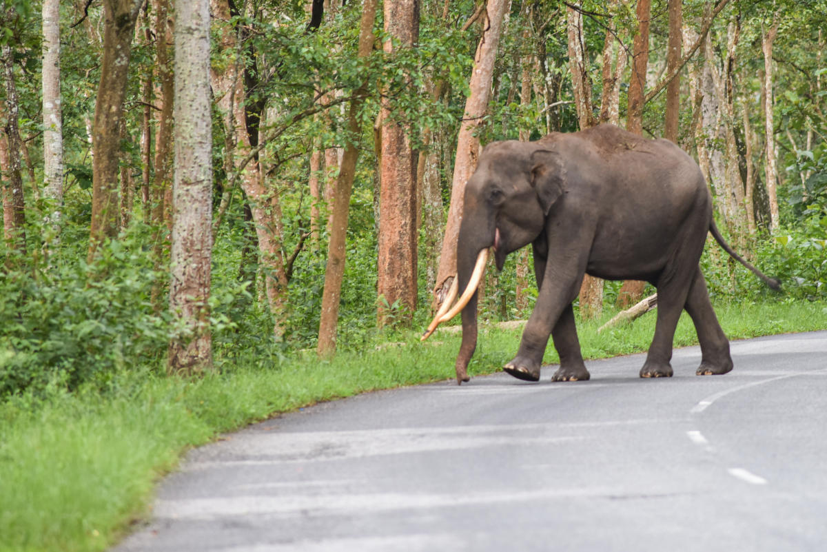 A bench of justices Madan B Lokur and Deepak Gupta told Additional Solicitor General A N S Nadkarni to consider the idea so that remedial and corrective steps can be taken and elephants in different parts of the country are not subjected to violence.