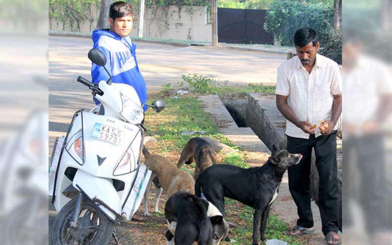 People feeding stray dogs often face hostility from neighbours. Pic for representation only