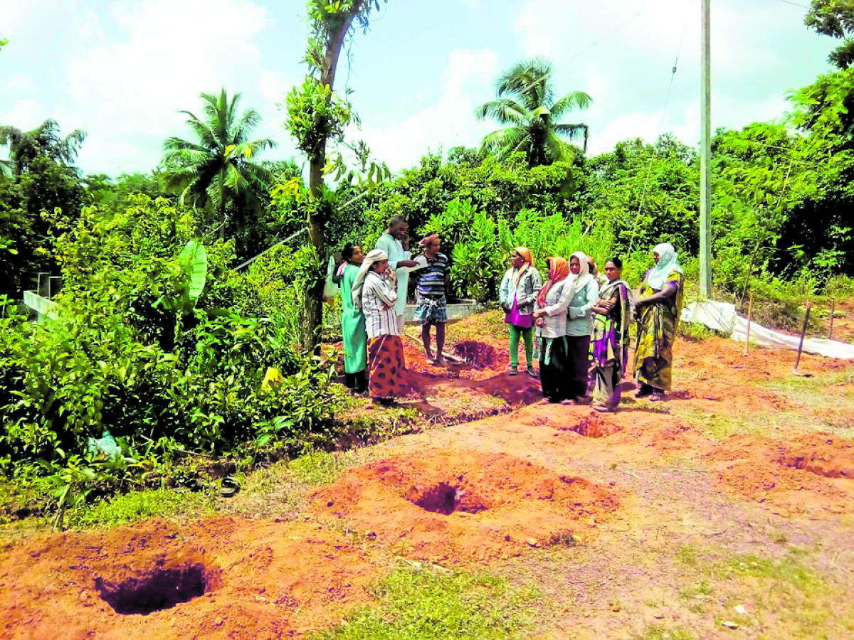 Pits dug up by women labourers for planting saplings for Akshara Kaithota at Government Government Higher Primary School at Kadumata in Kolnadu.