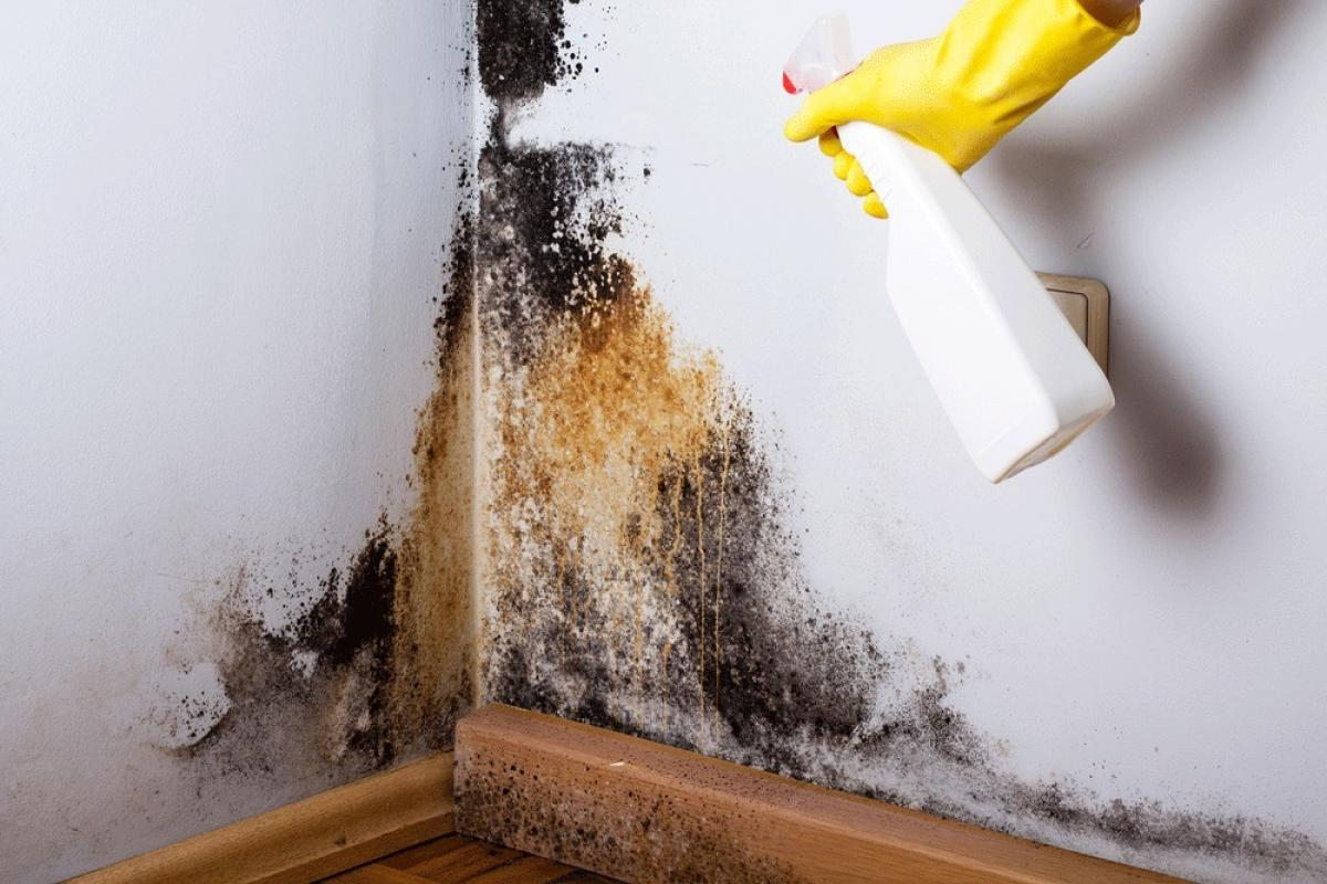 Mould produces allergens and irritants. Inhaling or touching it may therefore cause allergic reaction, such as sneezing, runny nose, asthma attacks, red eyes and rashes.