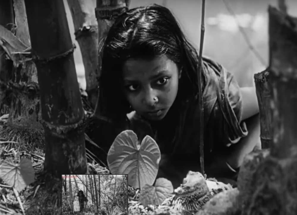 """A scene from """"Pather Panchali"""" ( Screen grab)"""