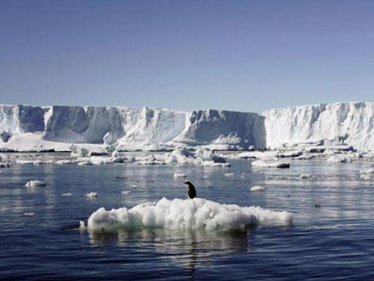 The proposed sanctuary, some five times the size of Germany, would ban fishing in a vast area in the Weddell sea, protecting key species including seals, penguins and whales.