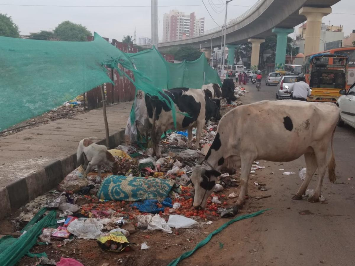 Garbage cleared, before and after photos on Kanakapura Main Road.