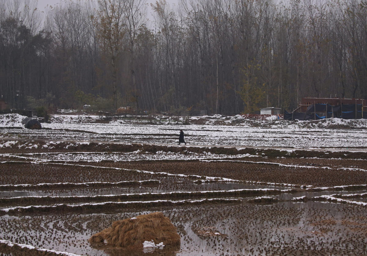 A man walks in a paddy field partially covered with snow on a cold day in Srinagar. Reuters photo