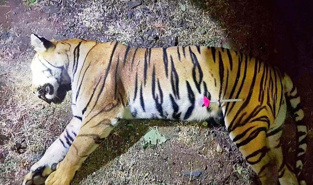Maharashtra's Forest Minister Sudhir Mungantiwar on Monday said that the guidelines of the National Tiger Conservation Authority and court orders were followed