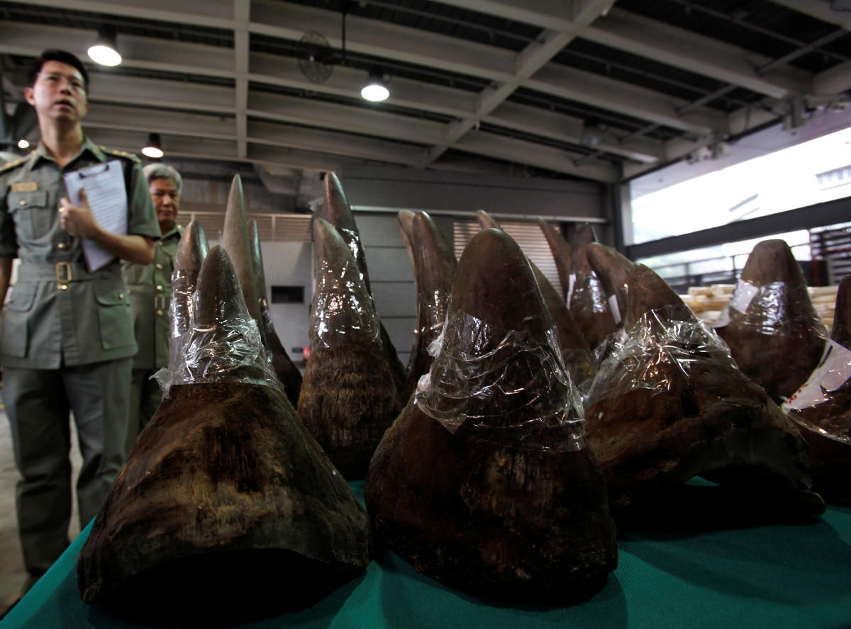 Customs officers stand next to part of a 33 rhino horns shipment seized by Customs and Excise Department, during a news conference in Hong Kong on November 15, 2011. Reuters