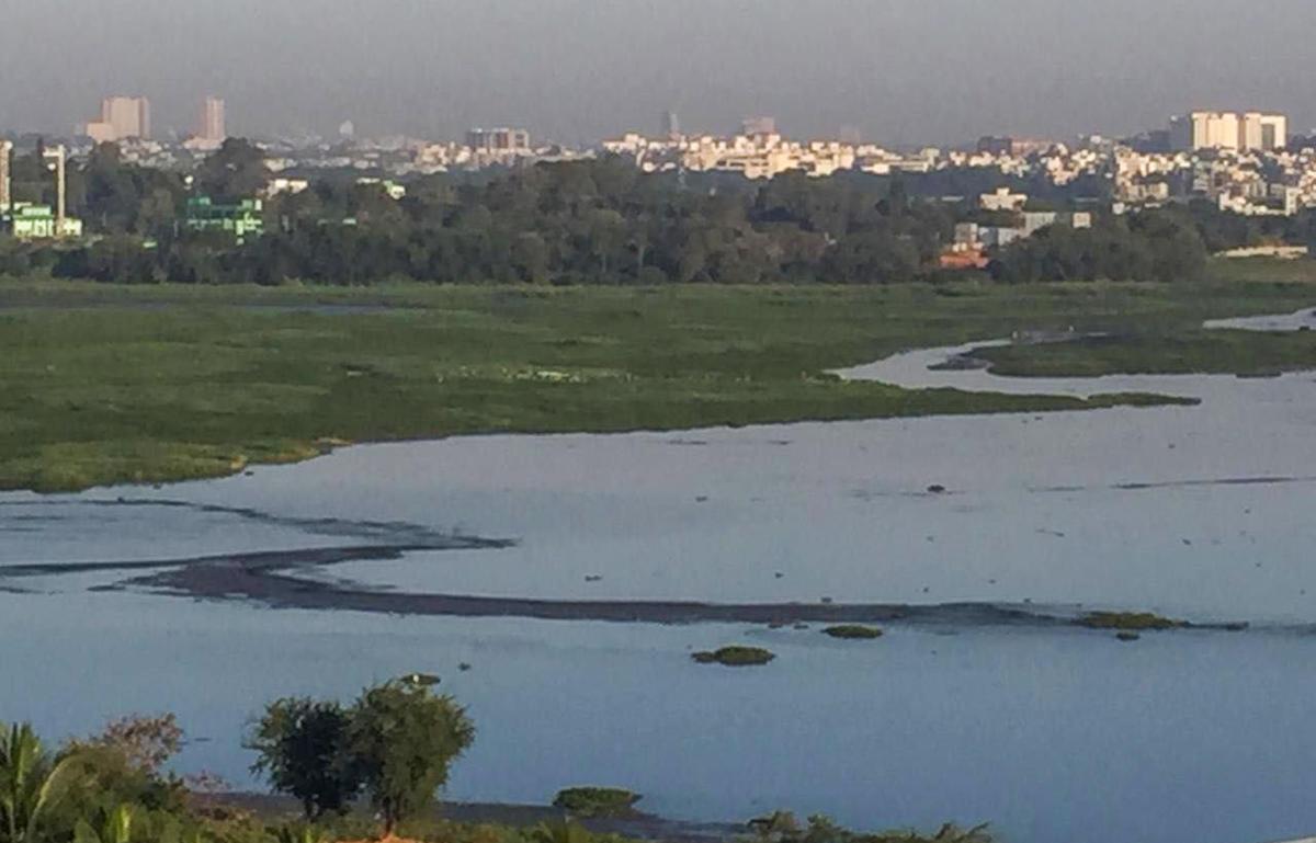 Bellandur Lake.