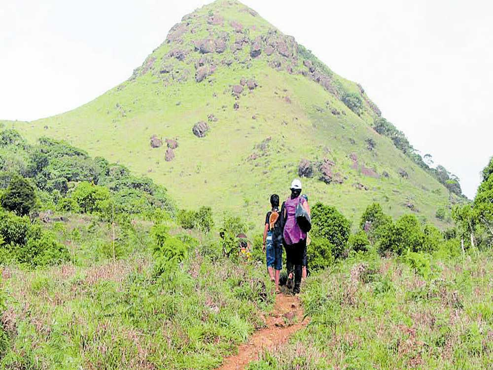 Muthappa said that, in the backdrop of heavy rain and landslides, the district administration had prohibited the entry of visitors to the hilly ranges.