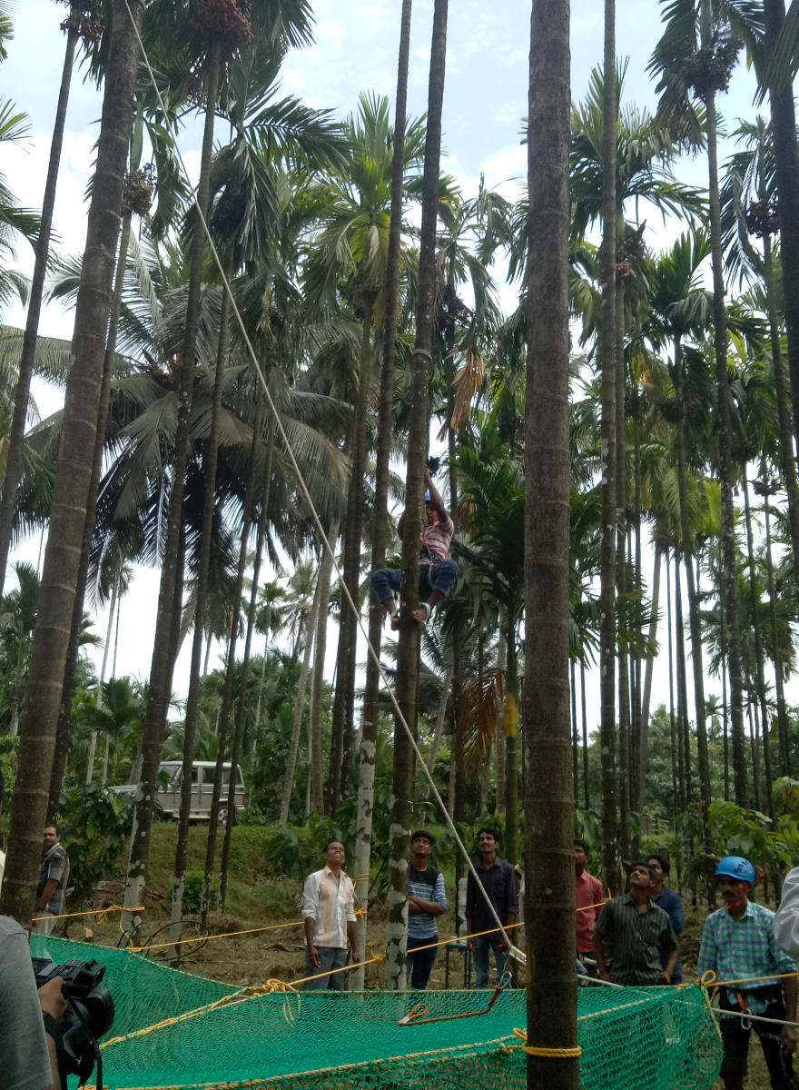 A demonstration on climbing arecanut tree was held as a part of training for arecanut tree climbers — Adike Kaushalya Pade — organised jointly by Campco, ICAR-CPCRI and the University of Agricultural and Horticultural Sciences, Shivamogga, at the CPCRI Regional Station at Vittal on Wednesday.