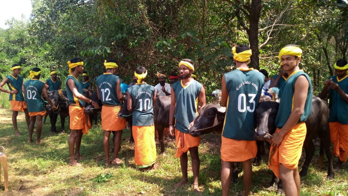 Youths undergo training at Kambala Conservation, Maintenance and Training Academy at Meeyaru in Udupi.