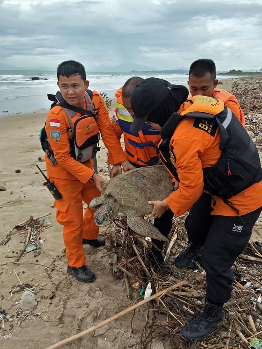 This handout picture taken and relased on December 27, 2018 by Indonesia's National Search And Rescue Agency (BASARNAS) shows rescuers carrying out one of eighteen stranded sea turtles on the beach in Kalianda, after the turtles were found washed ashore a