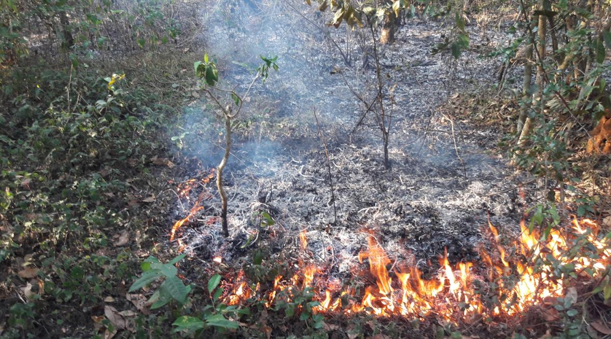 Forest fire at Balooru reserve forest limits at Charmadi Ghat in Mudigere taluk.