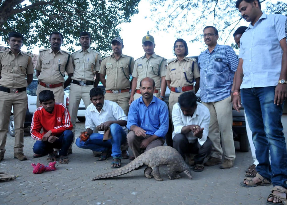 The accused (seated) along with the pangolin. Regional Forest Officer Shilpa and other officials are seen (standing).
