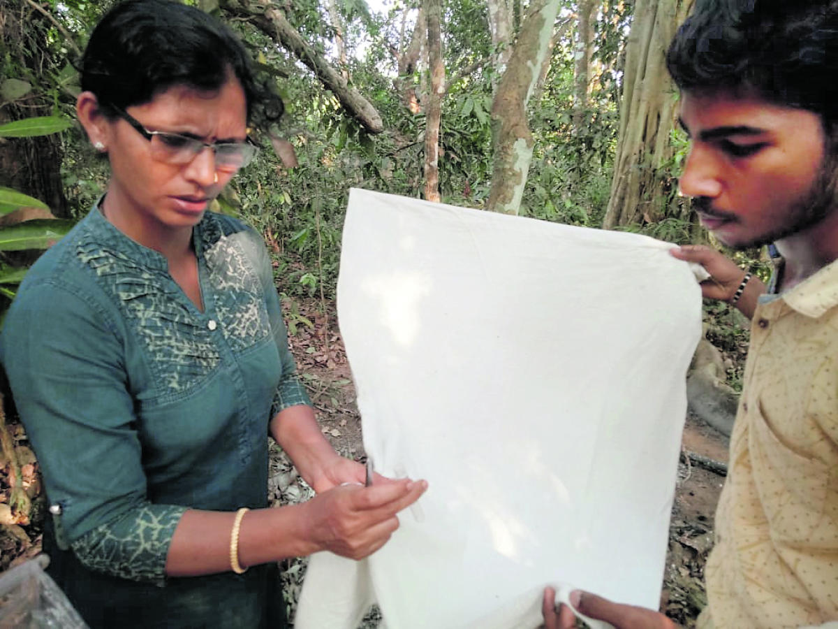 Udupi District Entomologist Muktha collects infected ticks in a test tube with the help of Tick Collector Vighnesh at Uddinamakki Marase village in Kandlur Gram Panchayat jurisdiction in Kundapur taluk.