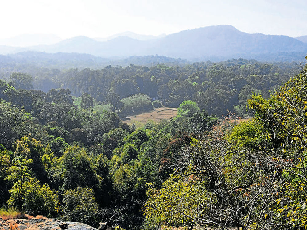 The former Principal Chief Conservator of Forests was speaking after the release of his book, 'Destroy Forests Destroy Life'. He said the fragmented forest patches will be able to restore the environment in bio-diverse regions likeAgumbein the Western Ghats.
