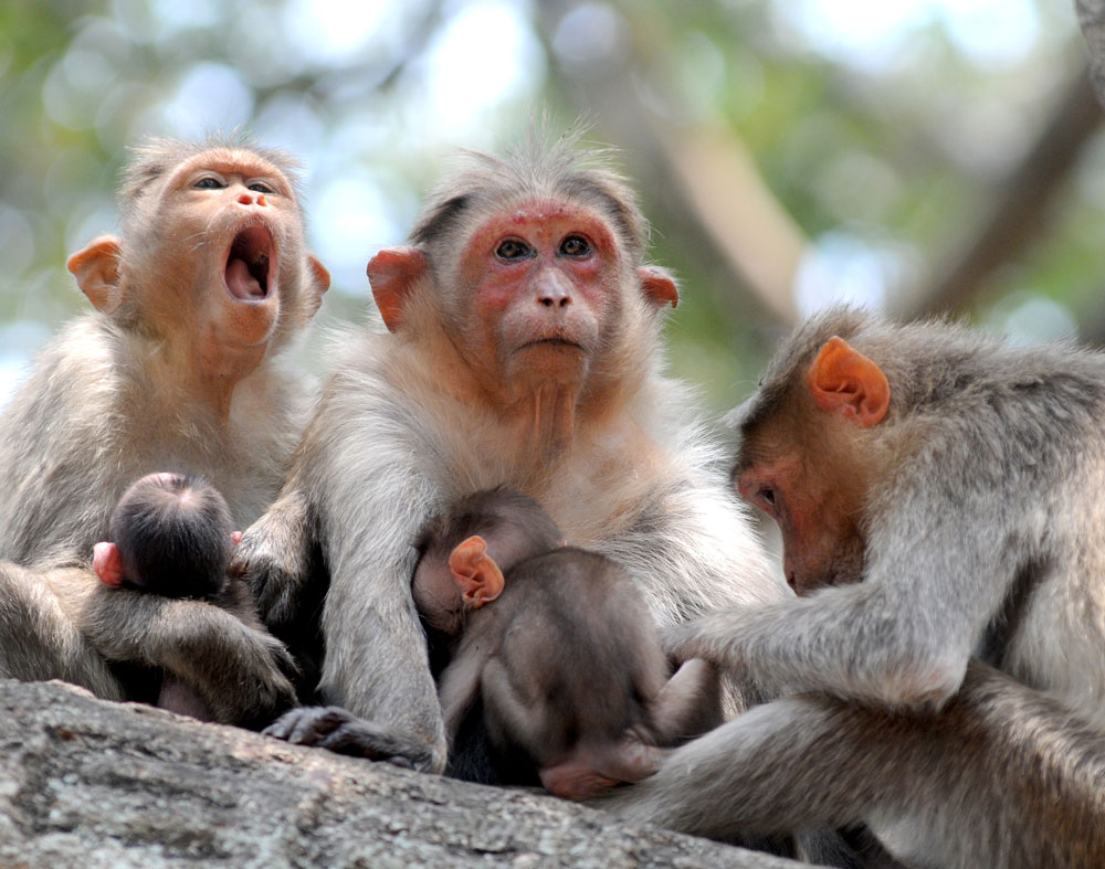 The area where the two monkey carcasses were found in Belthangady has been sprayed with malathion powder to kill the ticks. DH file photo