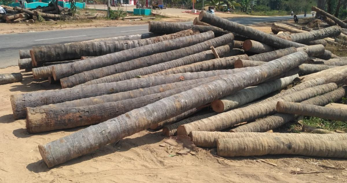 take a beating: Axed coconut trees at a sawmill in Pandavapura taluk, Mandya district.