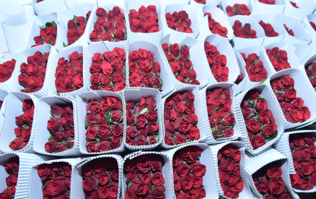 Roses at the International Flower Auction Bengaluru (IFAB) Limited in Hebbal in Bengaluru. DH photo/ Janardhan B K