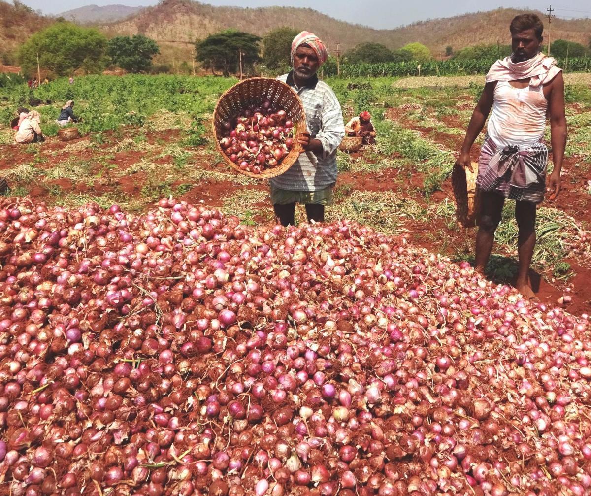 Farmers dumping onions.