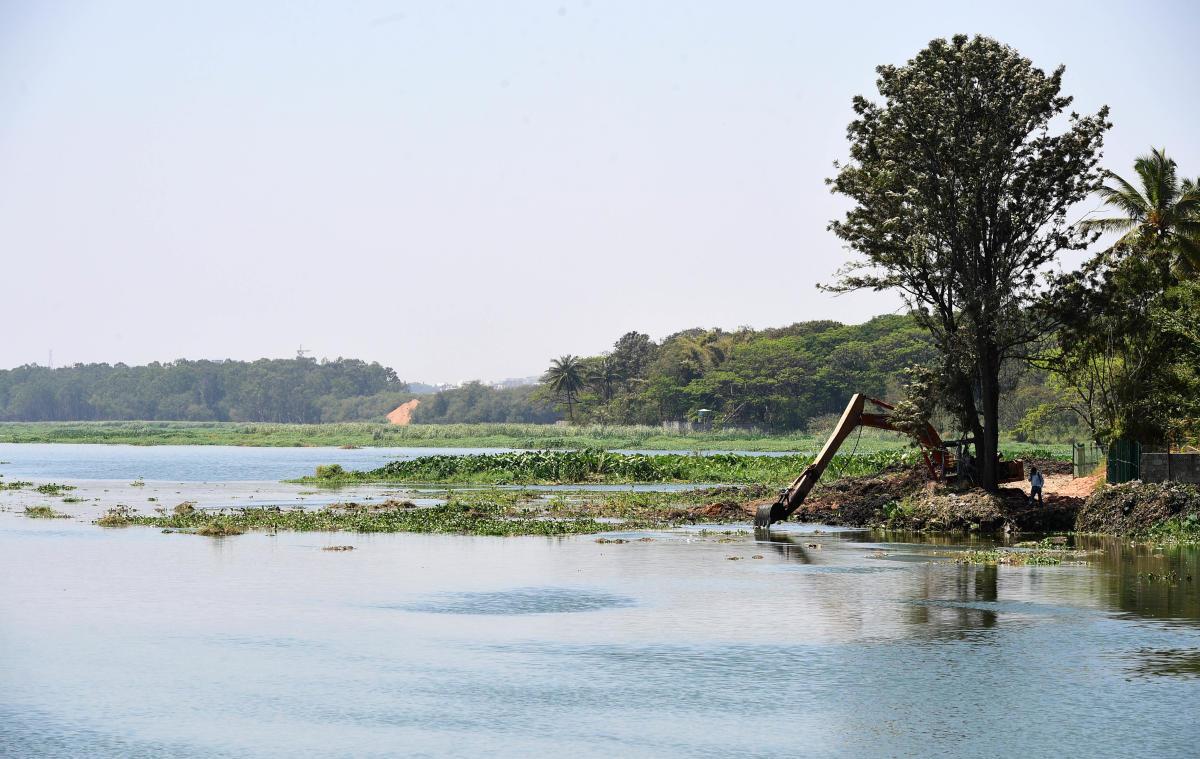 A file picture of Bellandur Lake.
