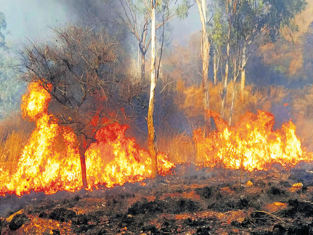 Fire alerts, tourism curbs across all forests in Karnataka