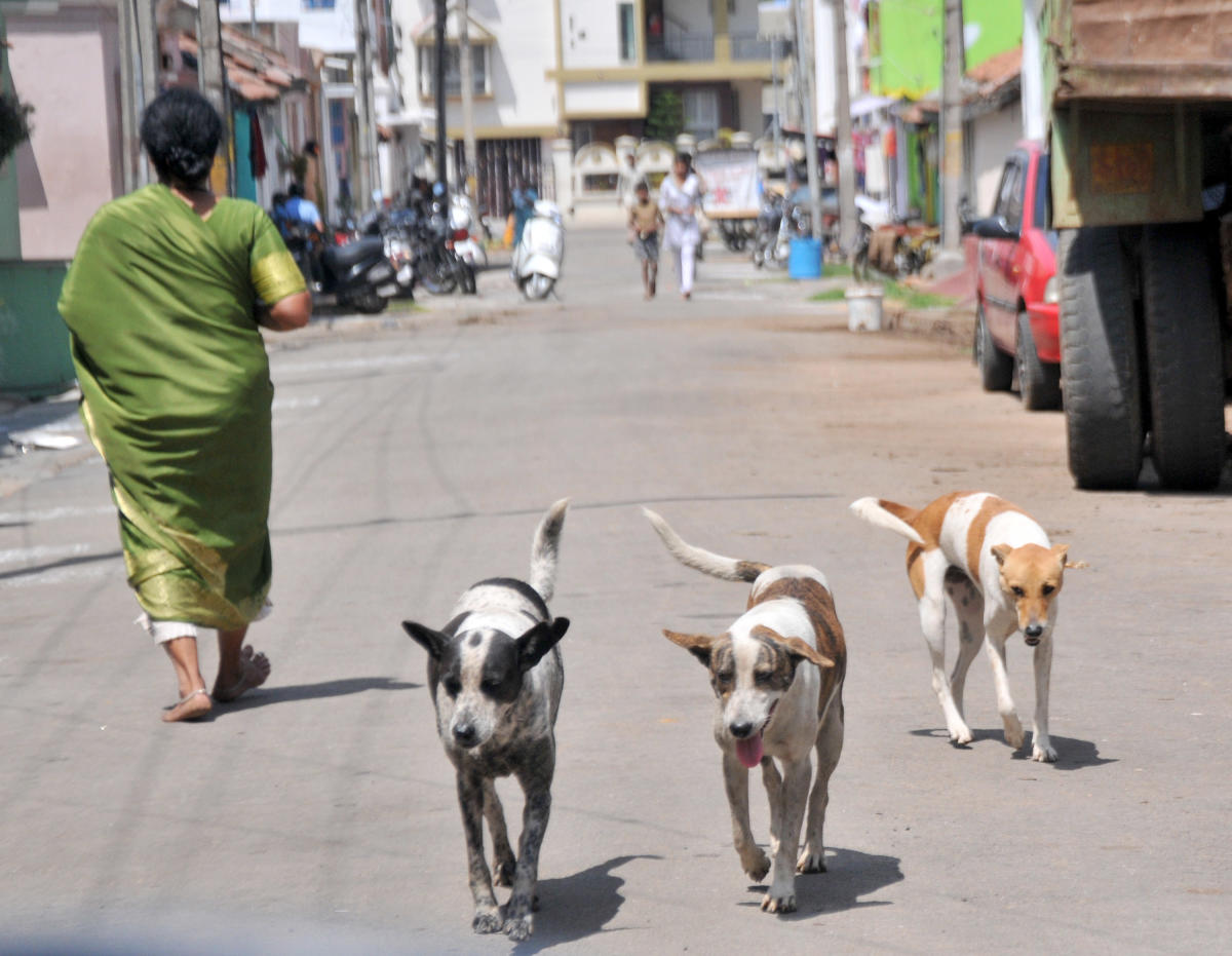 The dog catchers and the NGOs, who look after some of the shelters across the city, will use the app.