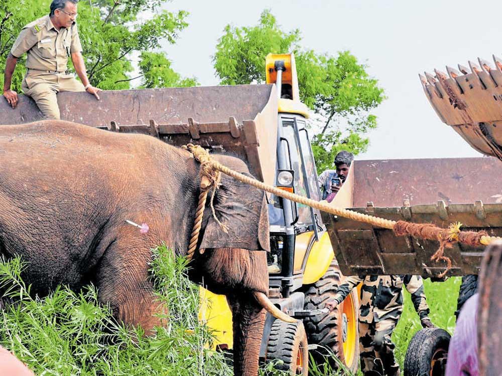 Tusker runs amok, kills 4 near Coimbatore