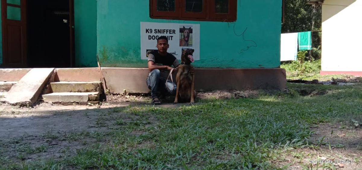 Sniffer dog to chase poachers in Assam's Orang park