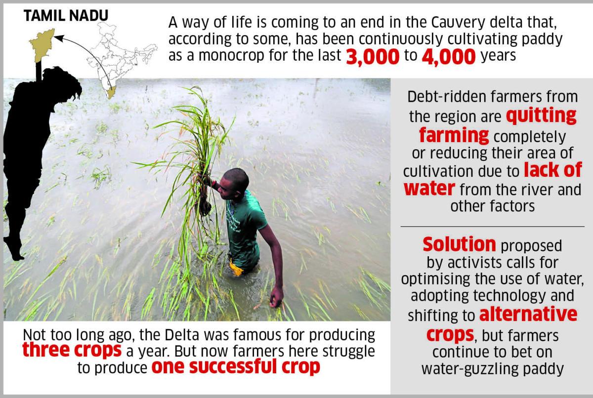 Struggle to regain farming glory in Cauvery Delta | Deccan