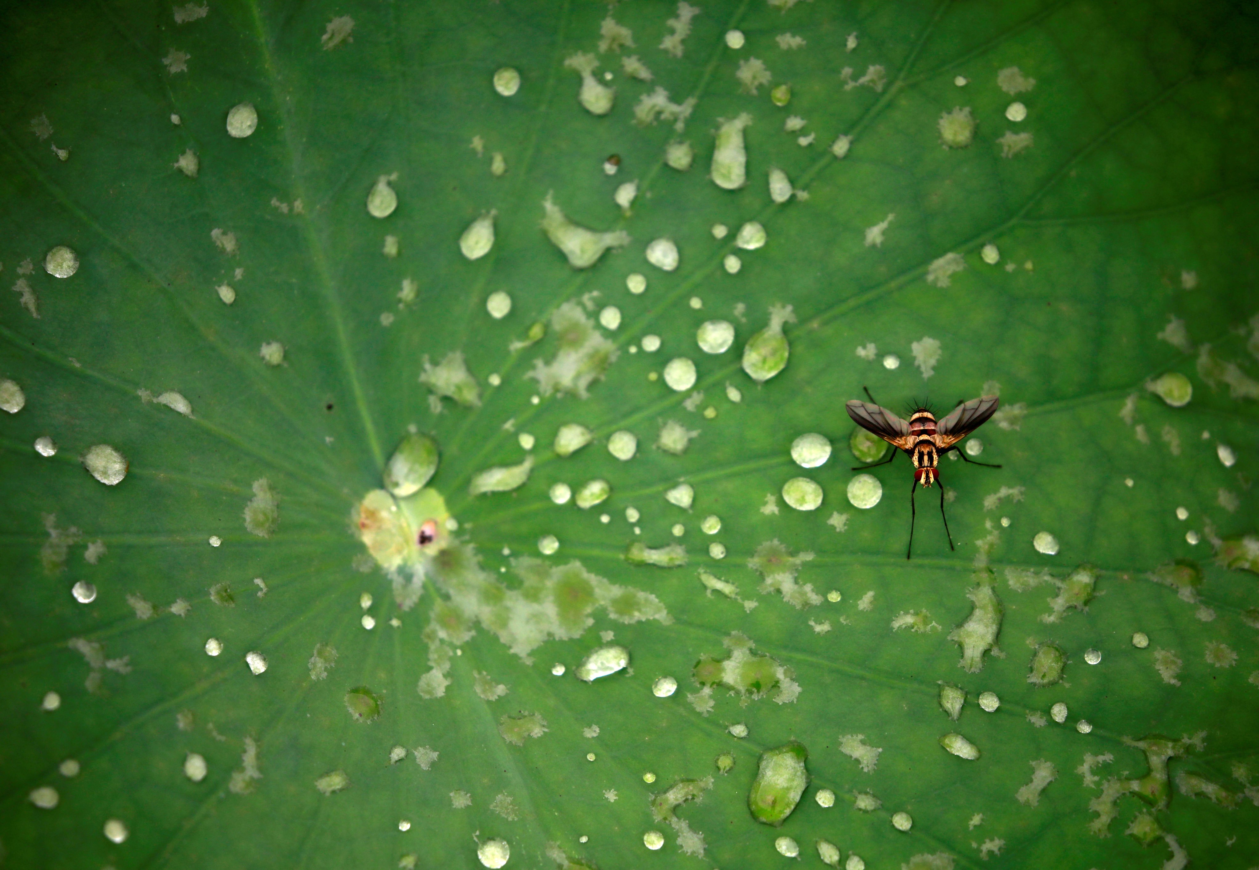 How plants defend against fungi, insects decoded thumbnail