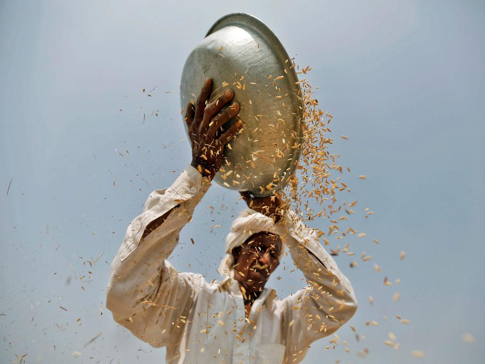 E-trading platform helps K'taka farmers earn 38% more income