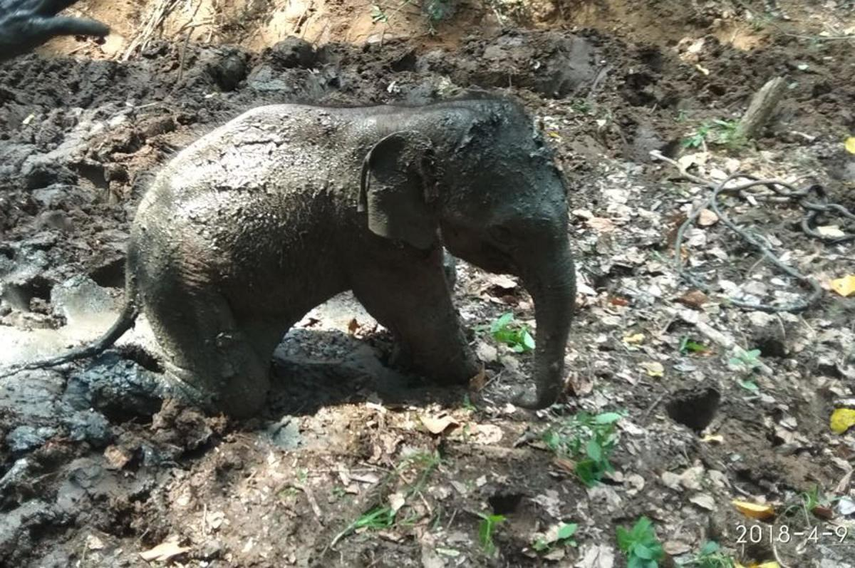 Elephant calf rescued