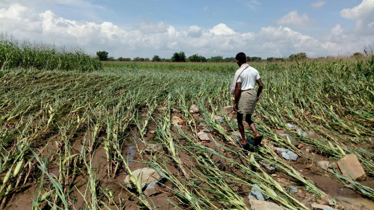 RISK MANAGEMENT: The enrolment for Prime Minister's Fasal Bima Yojana for the Kharif season has come down this year to 13 lakh hectares from around 17 lakh hectares last year. DH File Photo