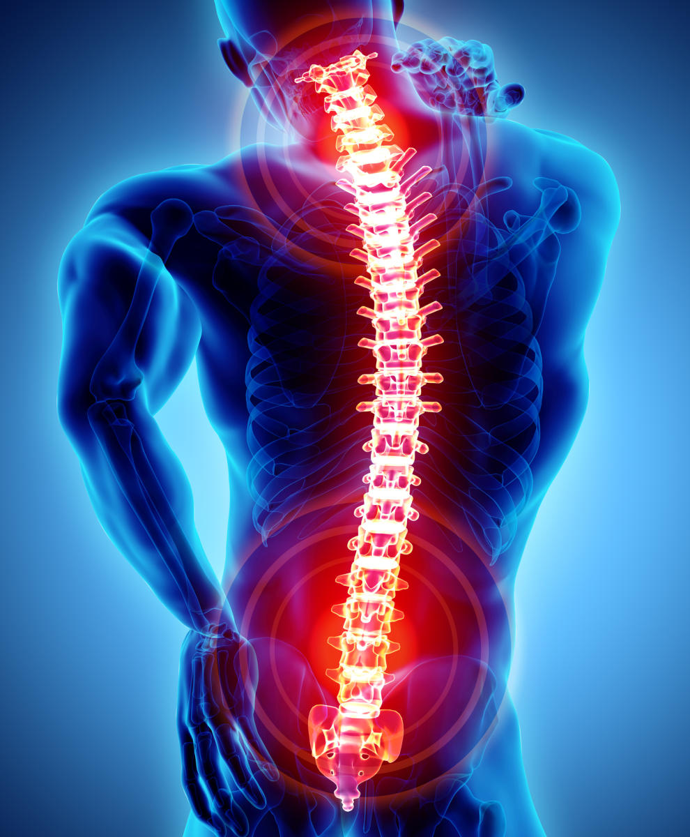 Our spinal cord is able to process and control complex body movements, say scientists who suggest that the organ may be 'smarter' than previously thought. File photo