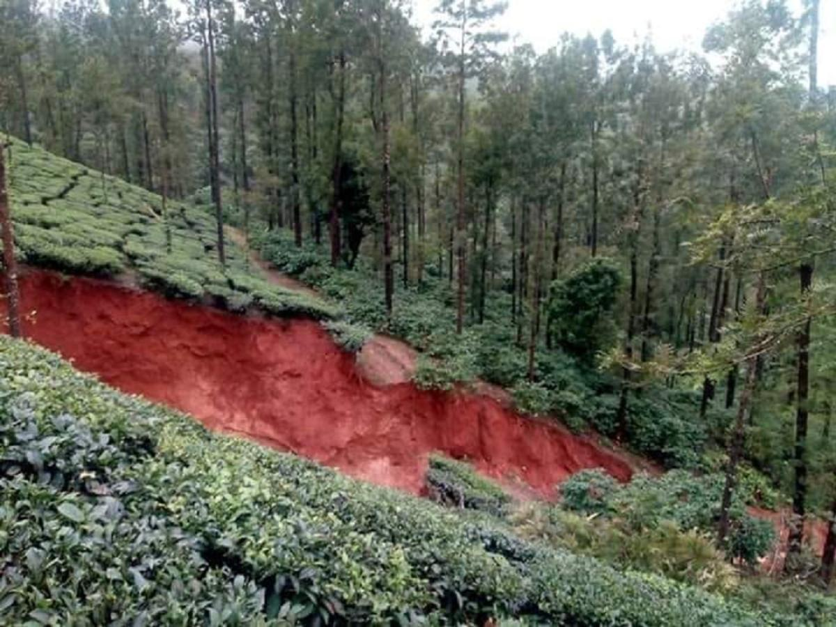 A view of the landslide at Mysuru Plantations, Bhoothanakadu, Chikkamagaluru district. DH Photo