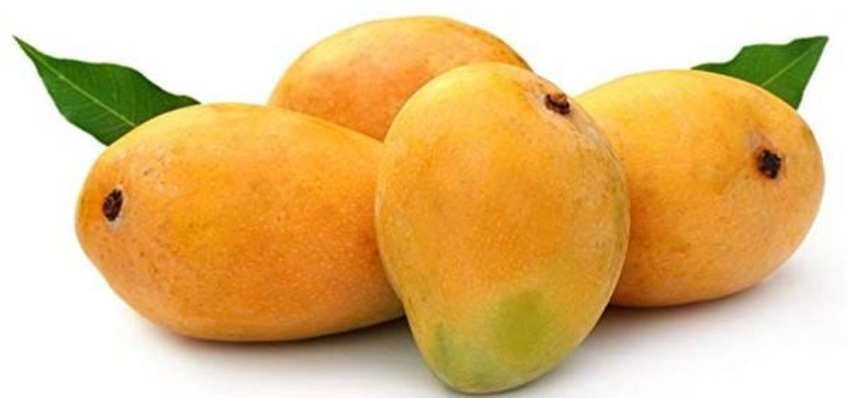 The Alphonso variety of mangoes from the picturesque coastal Konkan region of Maharashtra has finally got the Geograpical Indication (GI) tag.
