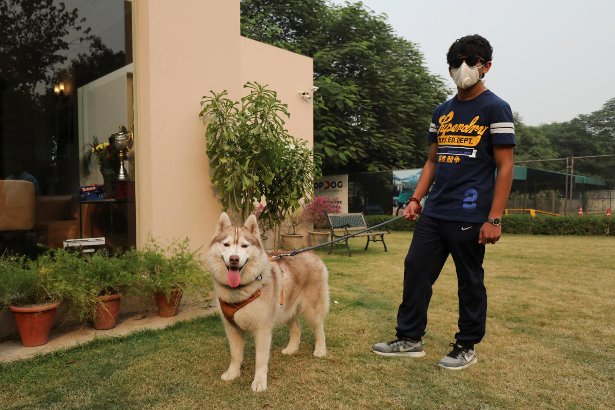 """The owner of a Siberian Husky named """"Juno"""" waits to collect it from TopDog, a Luxury Pet Resort, in Gurugram. (Reuters Photo)"""