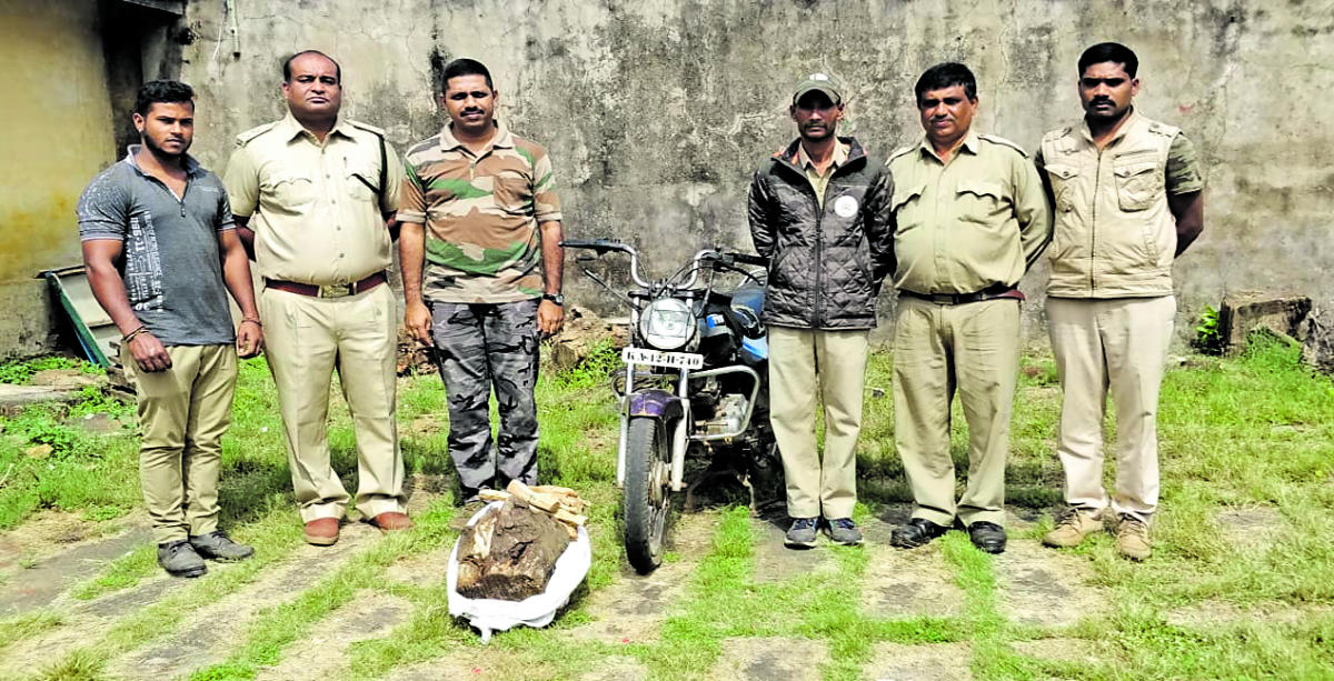 Forest Department officials along with the seized sandalwood and motorbike.