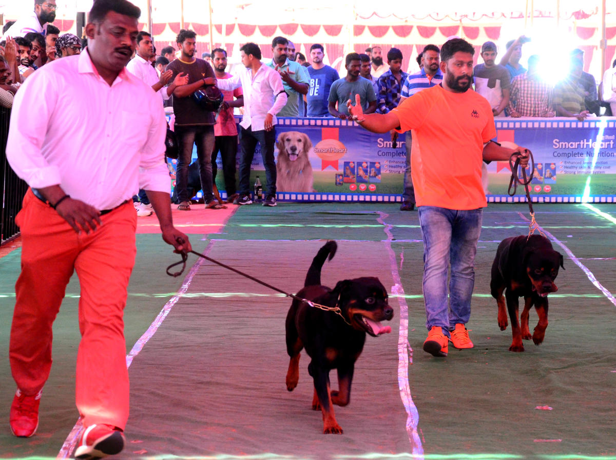 Rottweilers with their masters at the dog show held at Nehru Maidan in Mangaluru on Saturday.