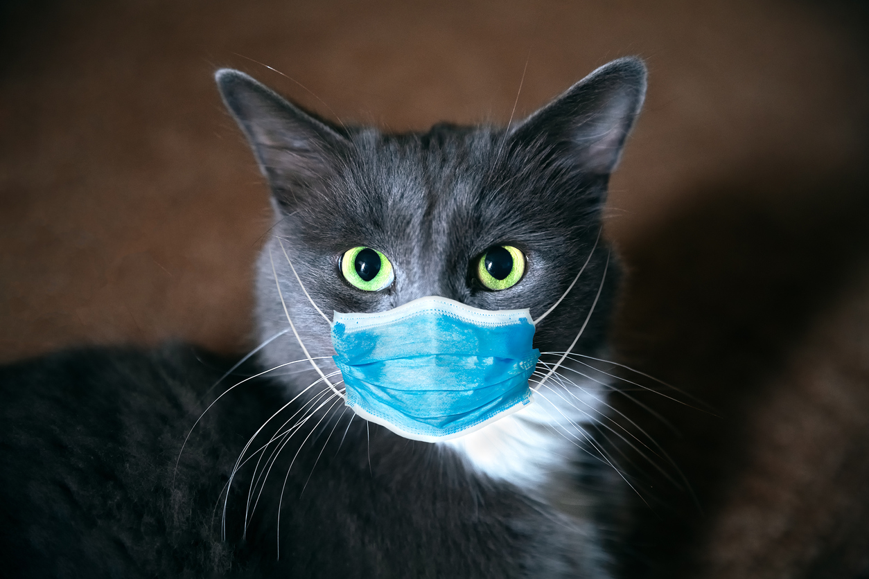 Don't kiss your pets: Cats with no symptoms spread ...