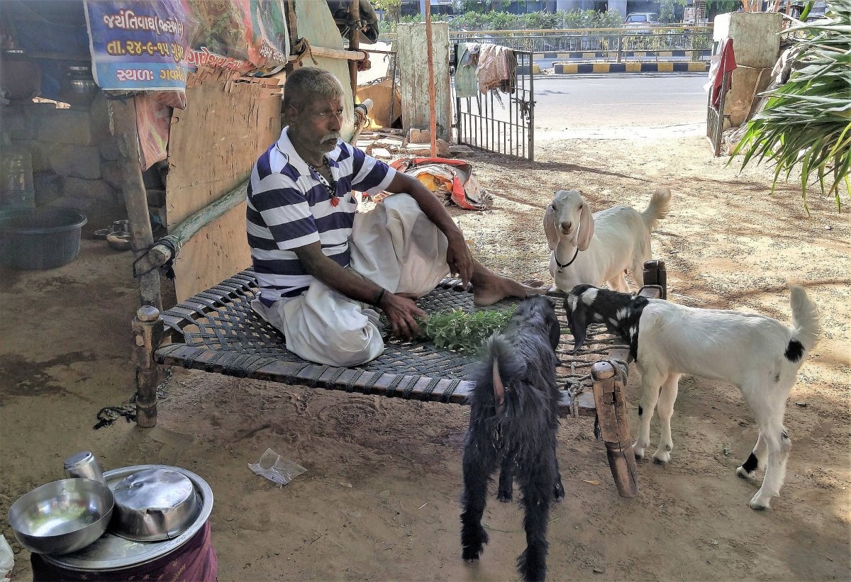 IN HARMONY For Bawre men, goats, cows and other animals are integral to their existence.