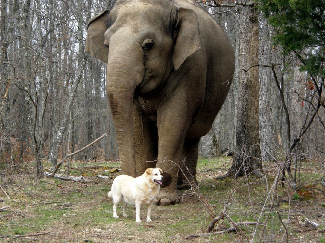 Tarra the elephant and Bella the stray dog forged a strong friendship