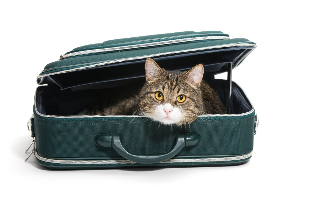 Just as you would pack everything your kids need for a trip, do the same for your pet.