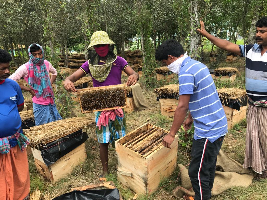 West Bengal govt develops safe, lucrative way of collecting honey for Sundarbans villagers