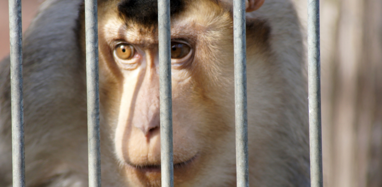 The 27 monkeys held by NASA were euthanized in one day in 2019: Report