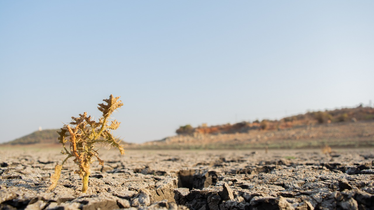 After Covid, the next big killer could be heatwaves: UN