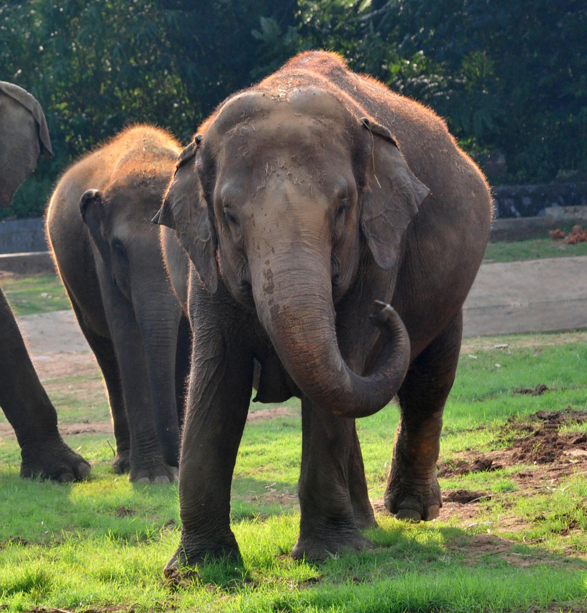 India is home to an estimated 27,312 elephants, according to the 2017 elephant census.